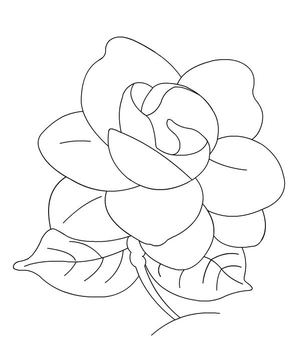 Gardenia coloring #2, Download drawings