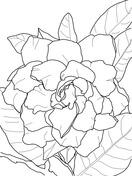 Gardenia coloring #6, Download drawings