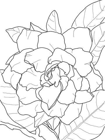 Gardenia coloring #12, Download drawings