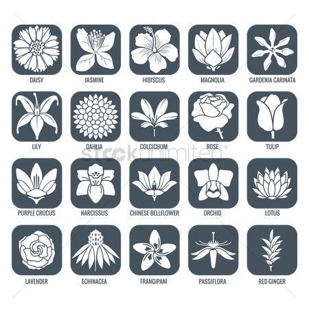 Gardenia svg #16, Download drawings