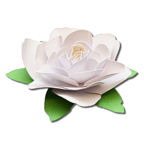 Gardenia svg #20, Download drawings