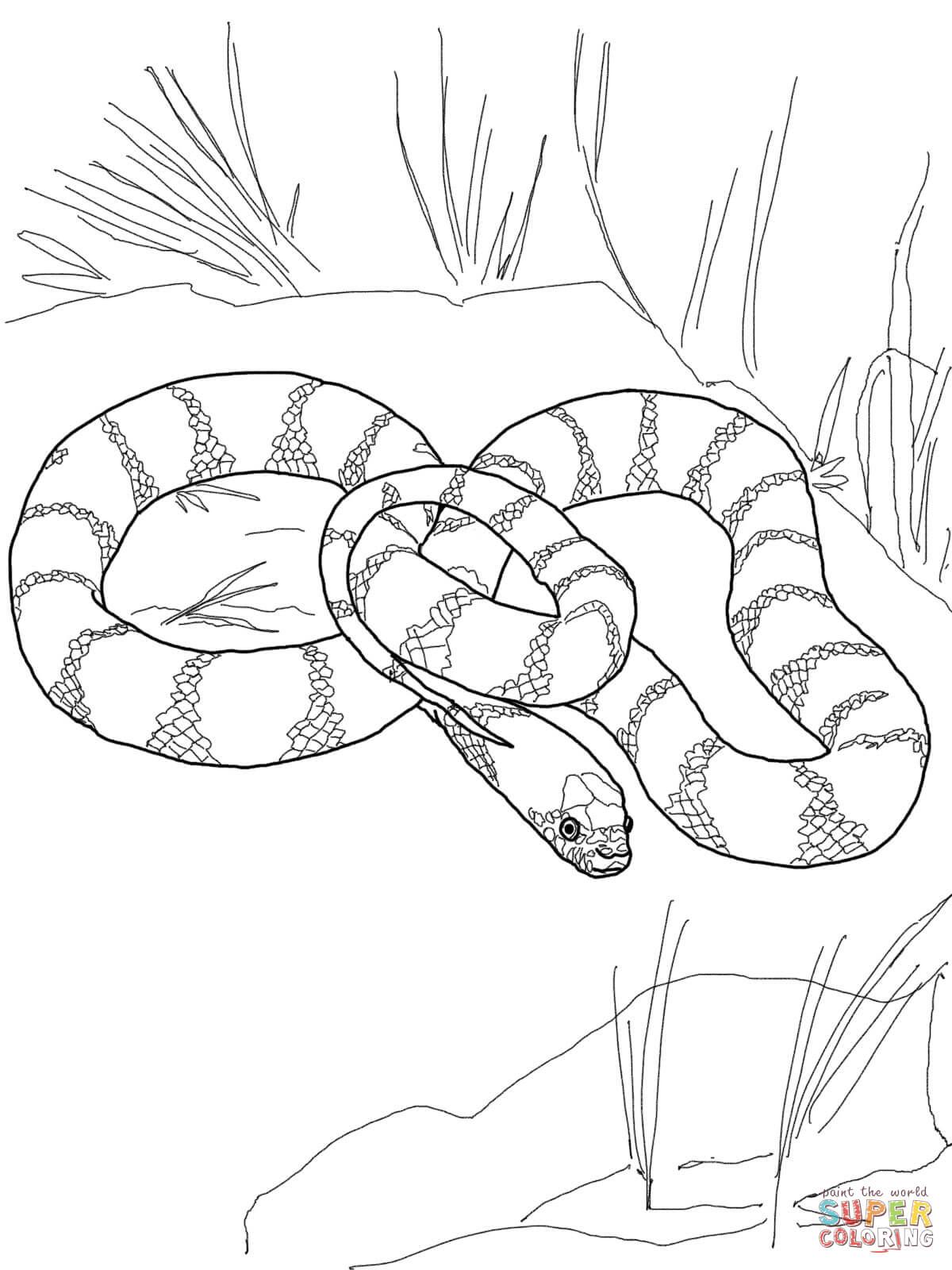 Tiger Snake coloring, Download Tiger Snake coloring for ...