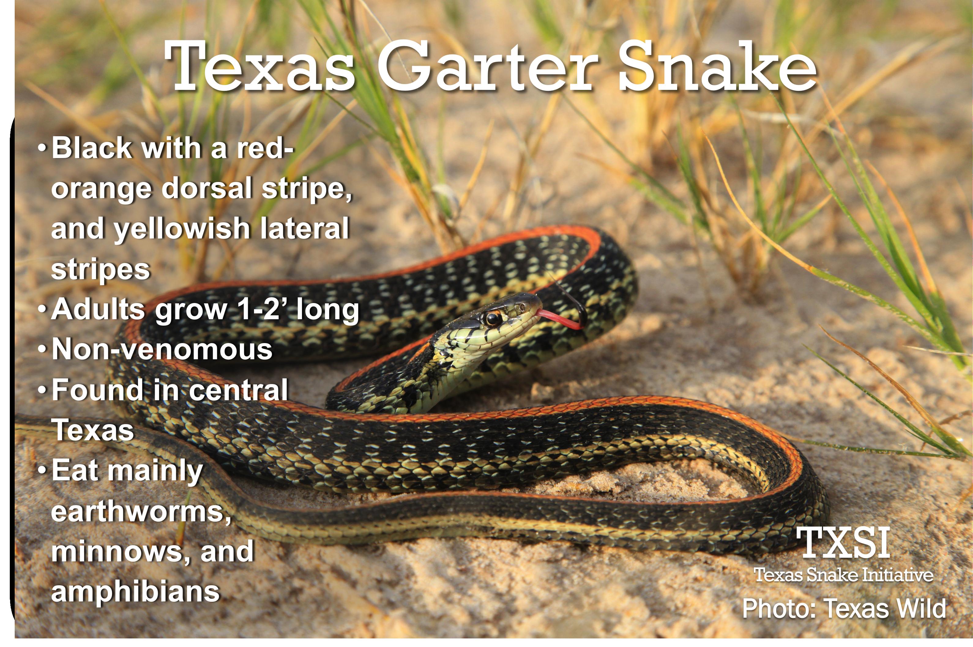 Garter Snake svg #7, Download drawings