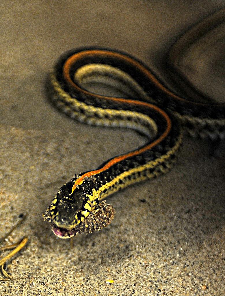 Garter Snake svg #16, Download drawings