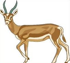 Gazelle clipart #19, Download drawings