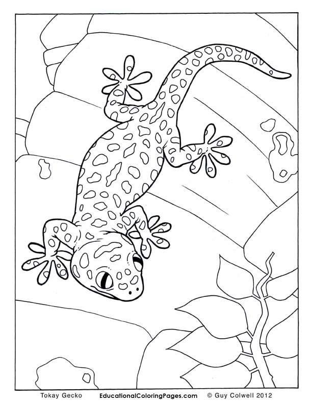 Goanna coloring #12, Download drawings