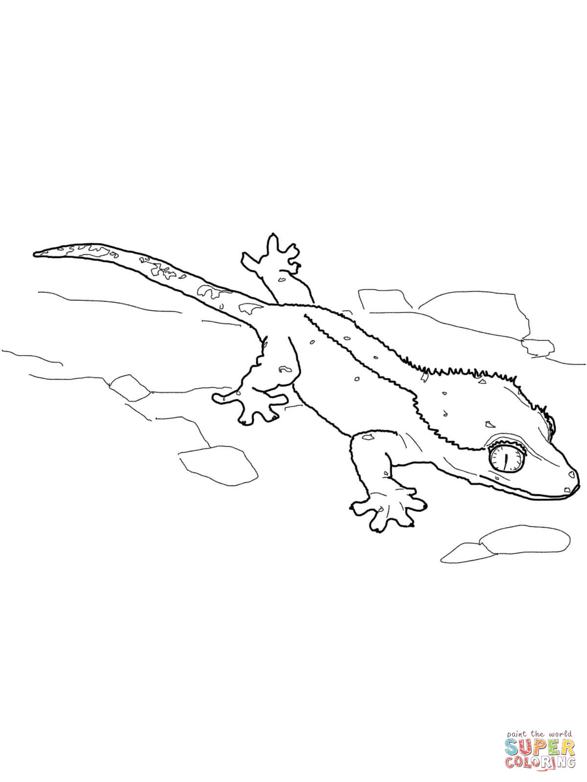 Leopard Gecko coloring #1, Download drawings