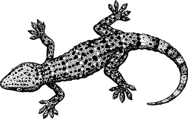 Gecko svg #20, Download drawings