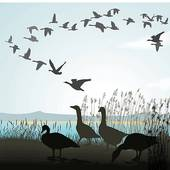 Geese Migration clipart #19, Download drawings