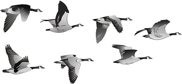 Geese Migration clipart #10, Download drawings