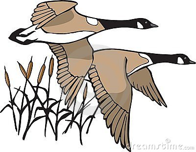 Geese Migration clipart #9, Download drawings