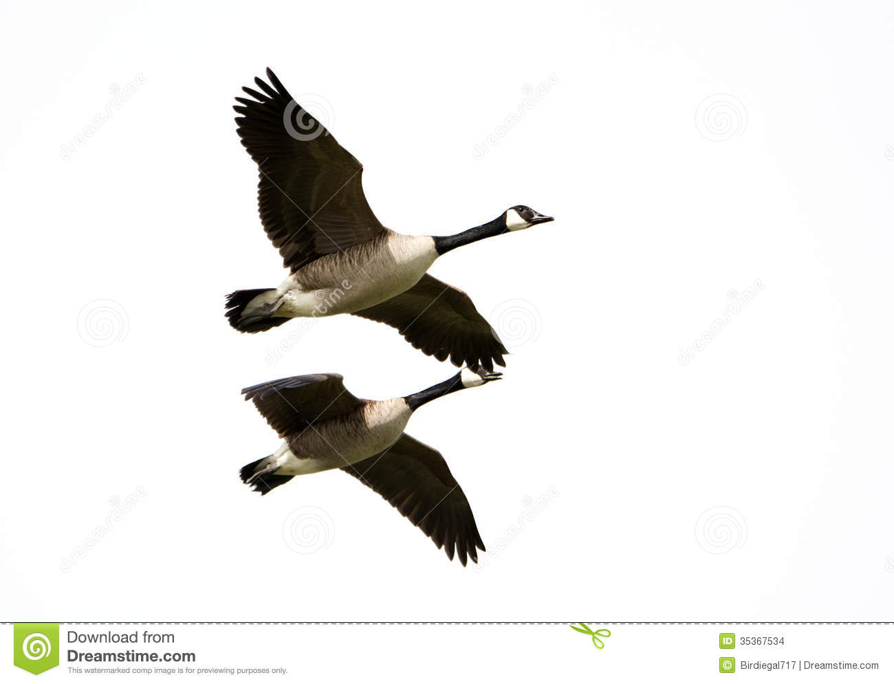 Geese Migration clipart #7, Download drawings