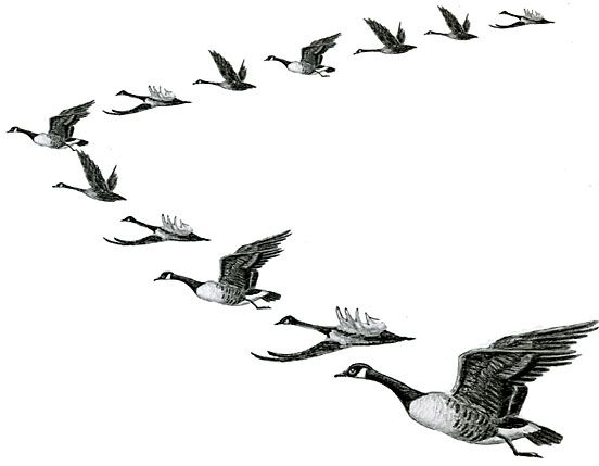 Geese Migration clipart #11, Download drawings