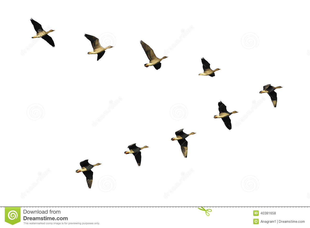 Geese Migration clipart #17, Download drawings