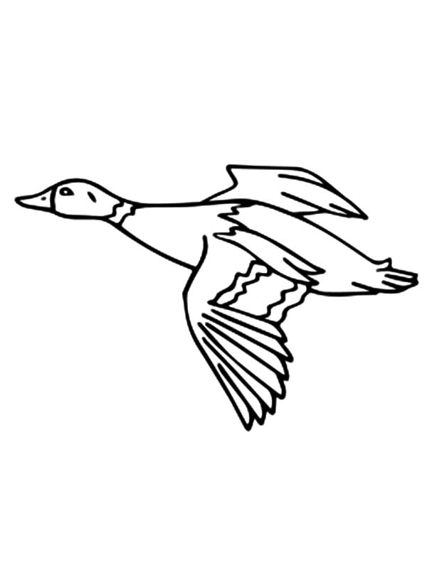 bird migration coloring pages - photo#5