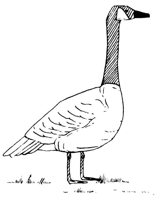 Geese Migration coloring #12, Download drawings