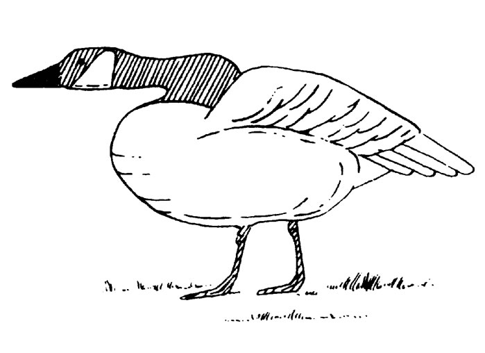 Geese Migration coloring #10, Download drawings