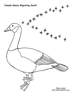 Geese Migration coloring #5, Download drawings