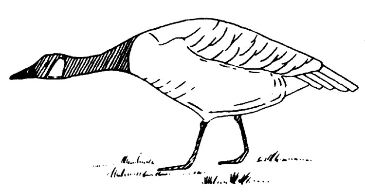 Geese Migration coloring #4, Download drawings