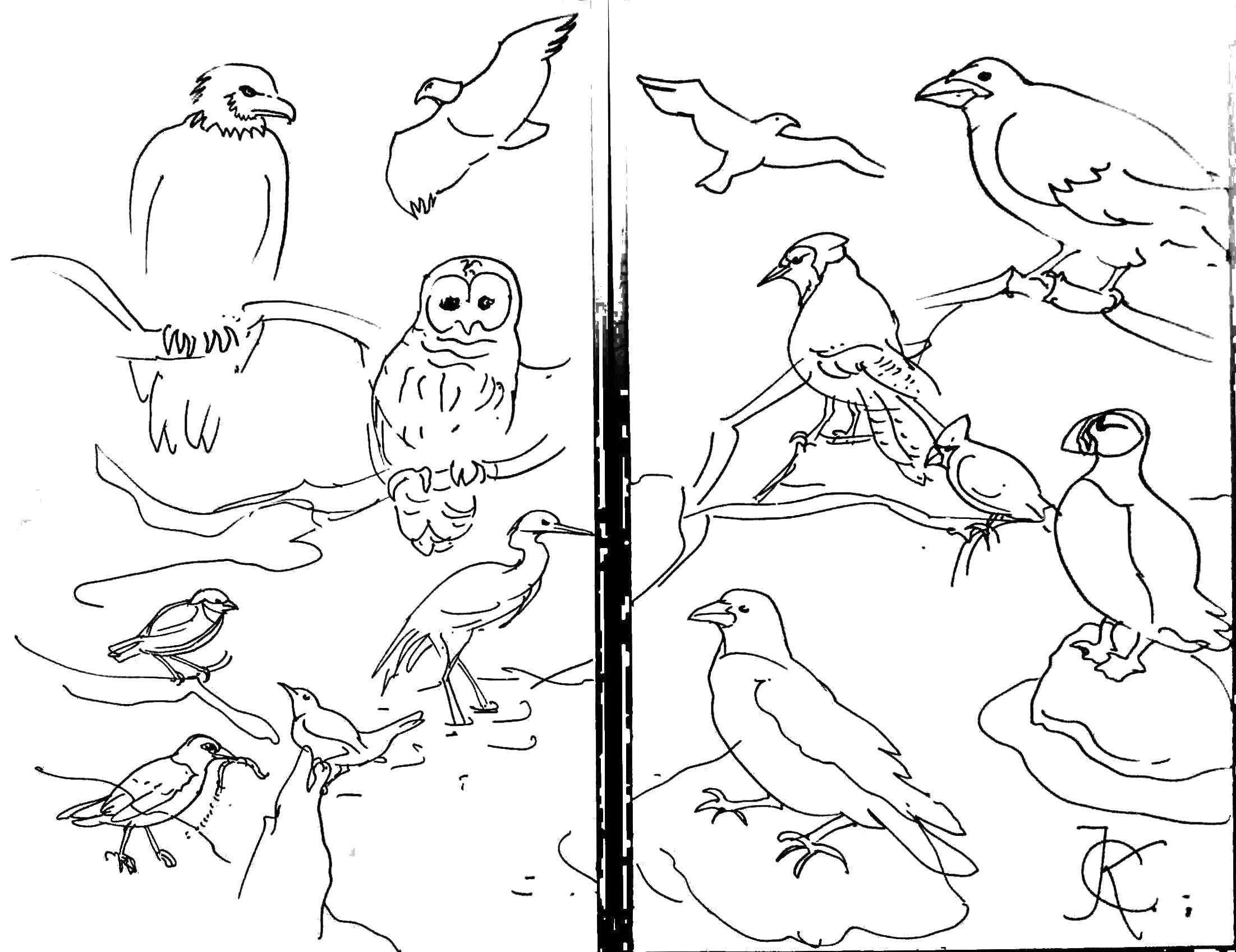 Geese Migration coloring #1, Download drawings