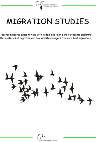 Geese Migration coloring #13, Download drawings