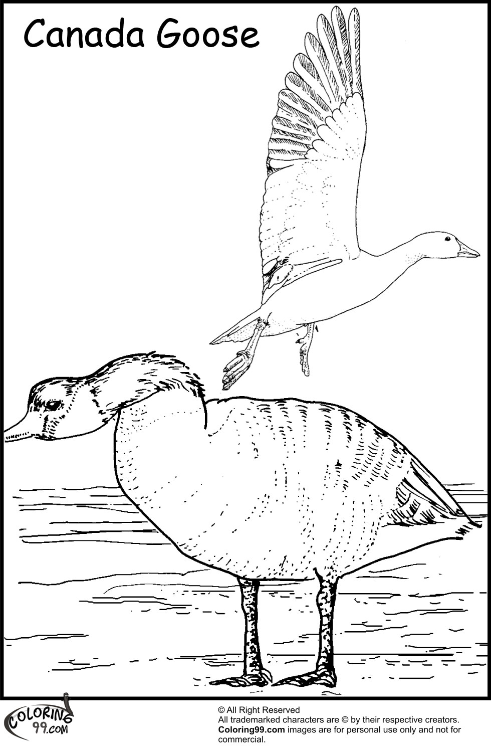 Geese Migration coloring #17, Download drawings