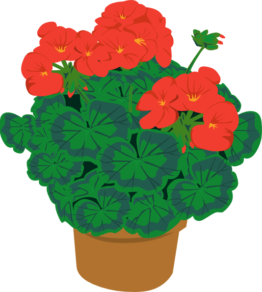 Geranium clipart #3, Download drawings