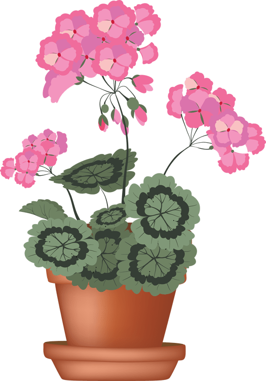 Geranium clipart #1, Download drawings
