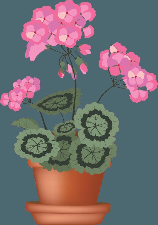Geranium clipart #20, Download drawings