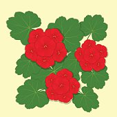 Geranium clipart #10, Download drawings