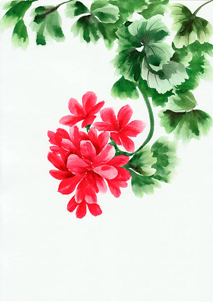 Geranium clipart #15, Download drawings