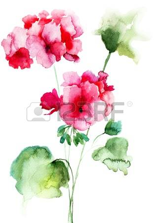 Geranium clipart #18, Download drawings
