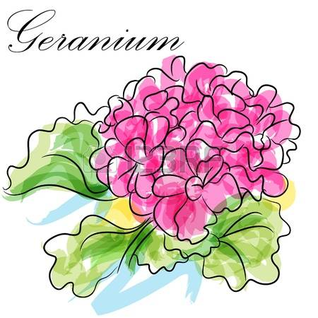 Geranium clipart #6, Download drawings