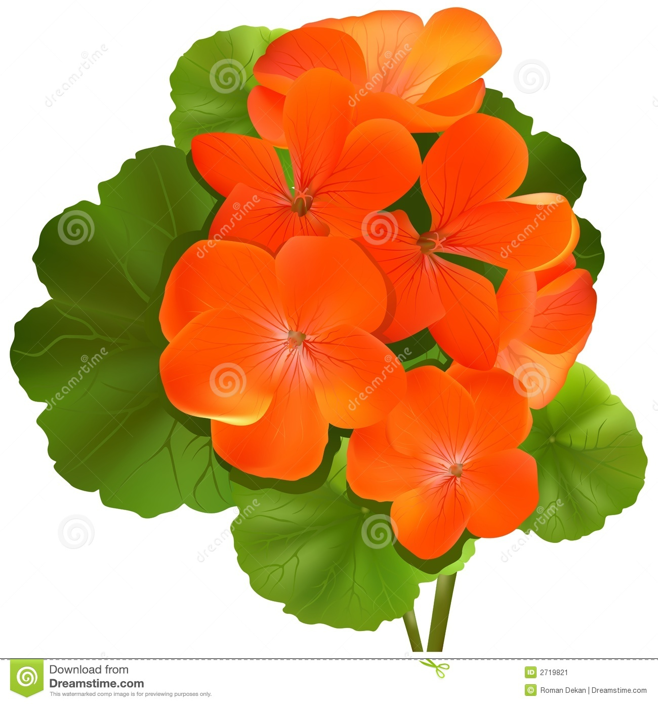 Geranium clipart #5, Download drawings