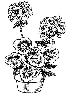 Geranium clipart #4, Download drawings