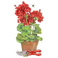 Geranium clipart #2, Download drawings