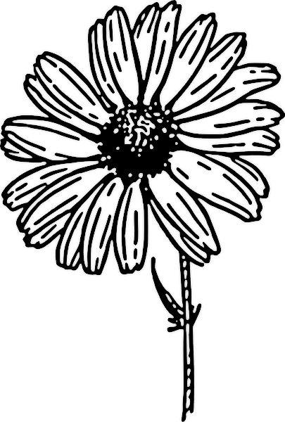 Gerbera coloring #18, Download drawings