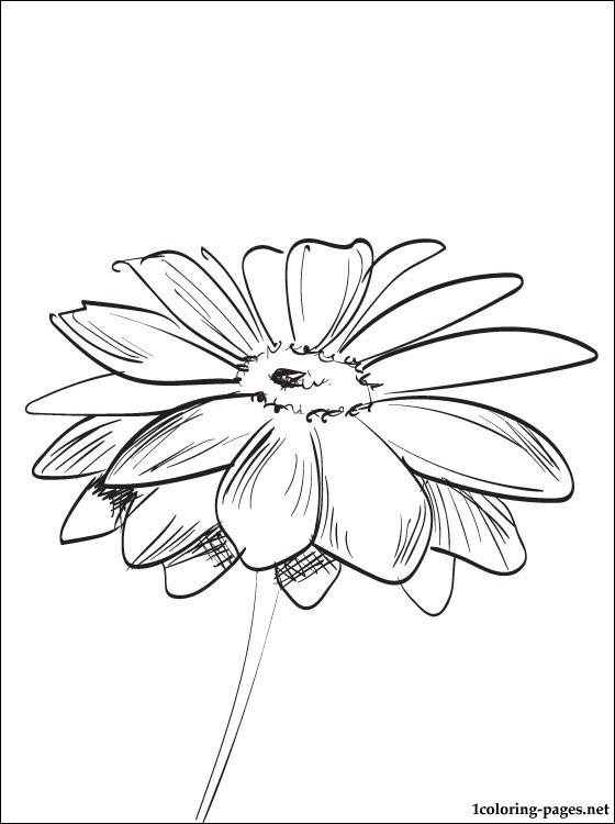 Gerbera coloring #20, Download drawings