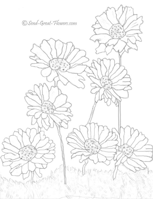 Gerbera coloring #13, Download drawings
