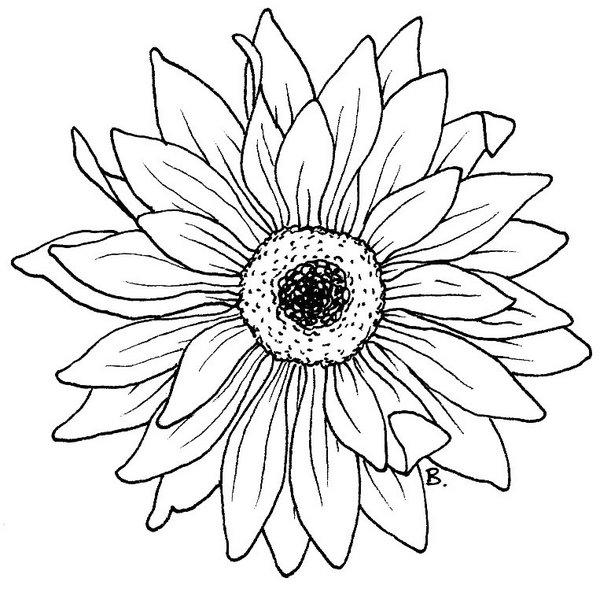 Gerbera coloring #12, Download drawings