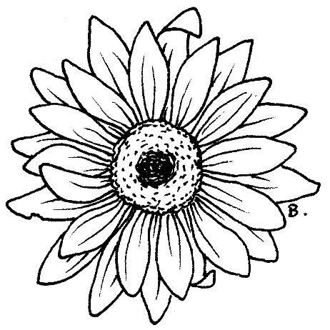 Gerbera coloring #11, Download drawings