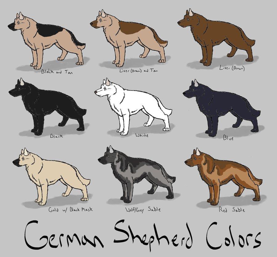 German Pinscher coloring #12, Download drawings
