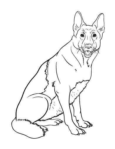 German Pinscher coloring #11, Download drawings