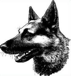 German Shepherd clipart #10, Download drawings
