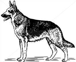 German Shepherd clipart #13, Download drawings