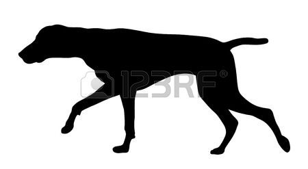 German Shorthaired Pointer clipart #15, Download drawings