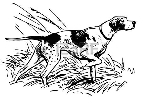 German Shorthaired Pointer clipart #6, Download drawings