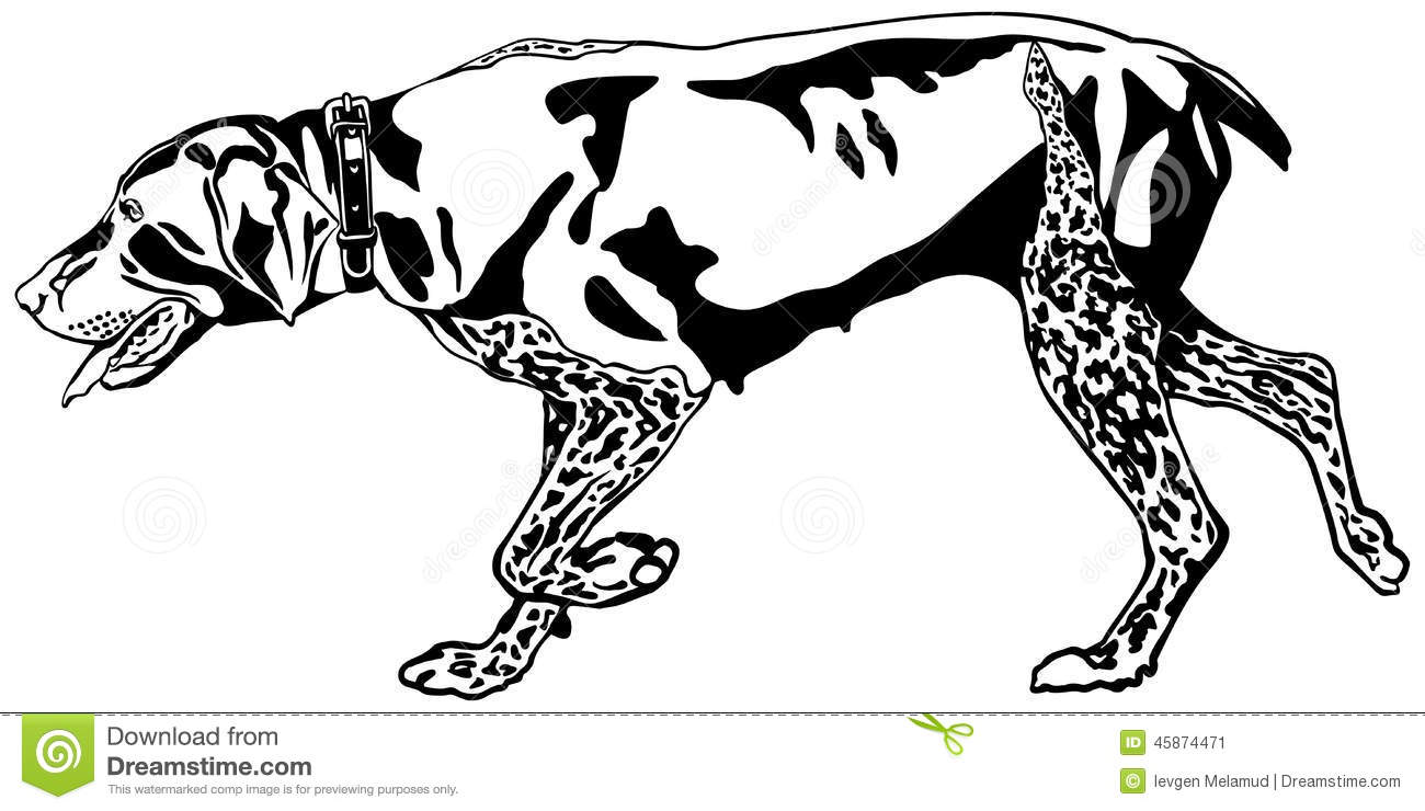 German Shorthaired Pointer clipart #9, Download drawings
