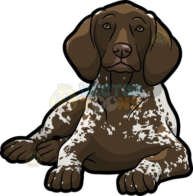 German Shorthaired Pointer clipart #8, Download drawings