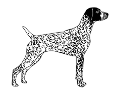 German Shorthaired Pointer clipart #18, Download drawings